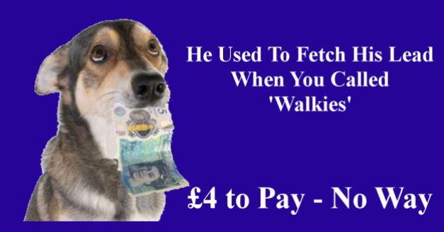 money-dog
